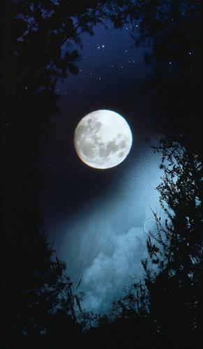 full-moon-briars