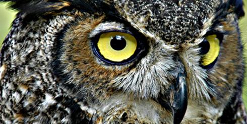 20: Owl and Cyclops | michael jarmer