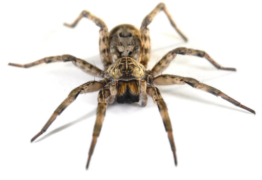 big spider | michael jarmer