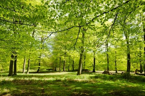 England - English Summer Woods